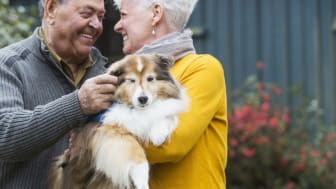 A happy senior couple standing outdoors in their back yard, smiling at each other. The woman is holding a collie in her arms. The dog is wearing a blue vest that indicates he is a therapy dog