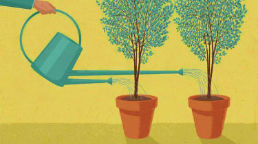 money trees in pots getting watered by double-spouted watering can