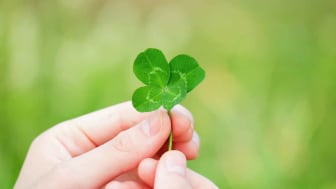 Photo of four-leafed clover