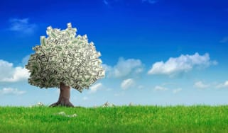 A tree with money for leaves.