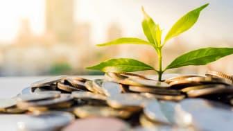 Vanguard Dividend Growth Fund