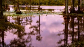 The early morning light shines through at the Noxubee Wildlife Refuge in Mississippi