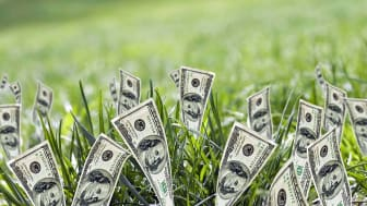Dollars growing out of the ground