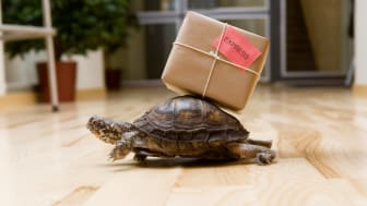 A turtle with a small package attached to its shell walks across a living room floor