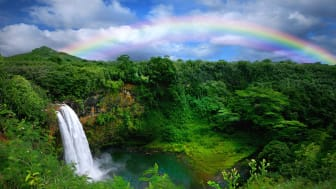 picture of Hawaii jungle with waterfall and rainbow