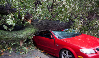picture of a tree that fell on a car