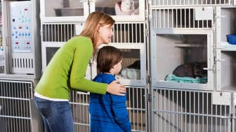 Mom and son at animal shelter looking at cat