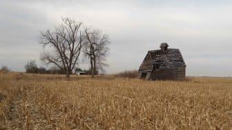 Abandoned, crumbling barn in Iowa corn field