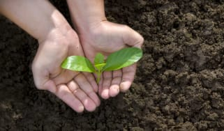 A person holding a plant sproutling