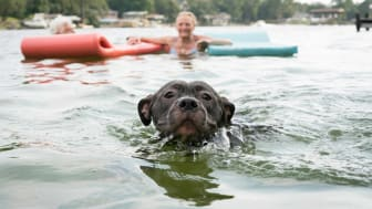 Dog swimming with people in Florida