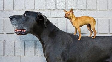 A small dog on a big dog