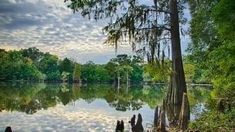 picture of a Mississippi lake
