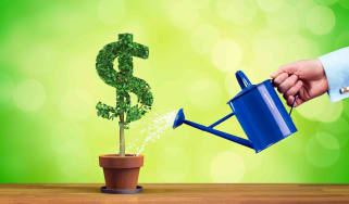 watered plant growing money tree