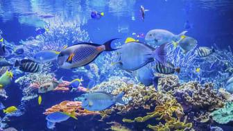 Photo under water