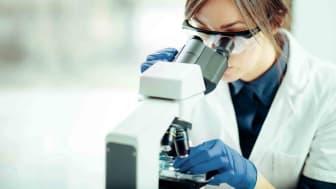 A scientist looks through a microscope