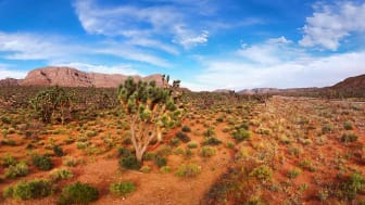 Stitched PanoramaAERIAL VIEW OF DESERT, ROCKS, MOUNTAINS, ROAD AND CACTUSES IN ARIZONA, UNITED STATES. DRONE SHOT, PANORAMA.