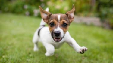 A small dog, representing small-cap stocks