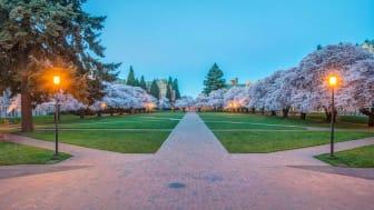 University of Washington Quad at Dawn