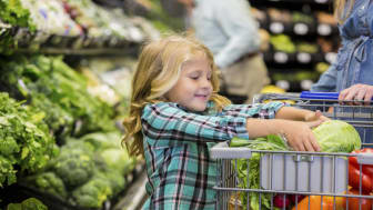 Elementary age Caucasian blonde little girl is smiling while placing lettuce in shopping cart. Child is shopping for produce and healthy food with her mother in local grocery store. Child is