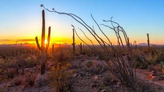 A desert scene with a cactus