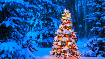 Christmas tree glowing outdoors in the forest
