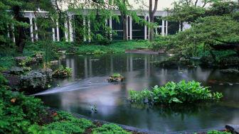 Fish Pond in rain, Oberlin College Conservatory, Ohio