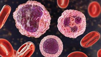blood cells, lymphocytes