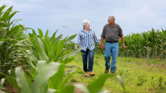 Senior couple strolling in an Iowa cornfield