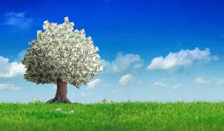 A tree whose leaves are made of money.