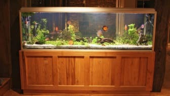 picture of a large fish tank