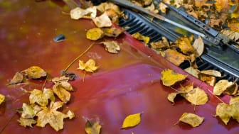 Photos of leaves piled up on car
