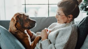 Divorce Tips to Avoid a Messy Dog Custody Battle