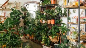 An abundance of houseplants inside a residence