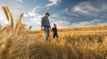 A farmer and his son walk through a wheat field.